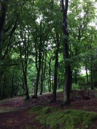 louise-zaar-skov-billede